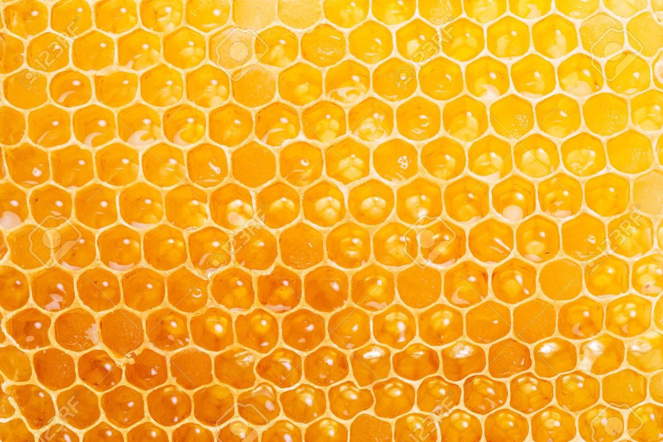 Honeycomb. High-quality picture. Macro shot. Standard-Bild - 47423257