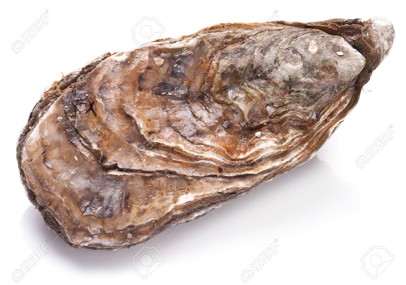 Raw oyster on a whte background. Standard-Bild - 53788804