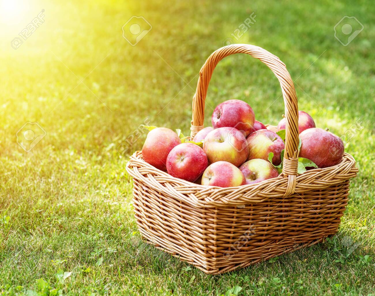 Apple harvest. Ripe red apples in the basket on the green grass. - 120617626