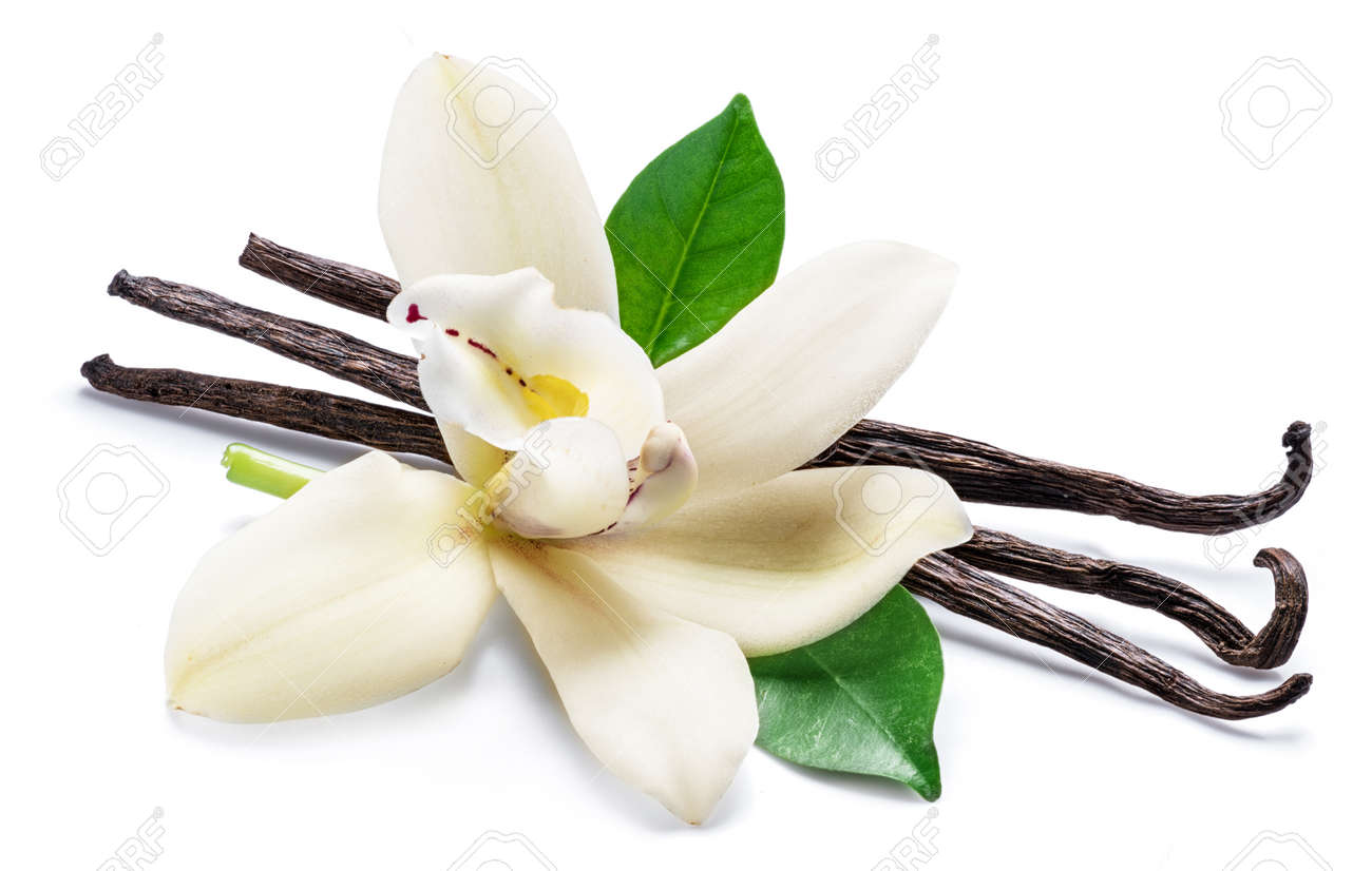 Dried vanilla sticks and orchid vanilla flower isolated on white background. - 133690976