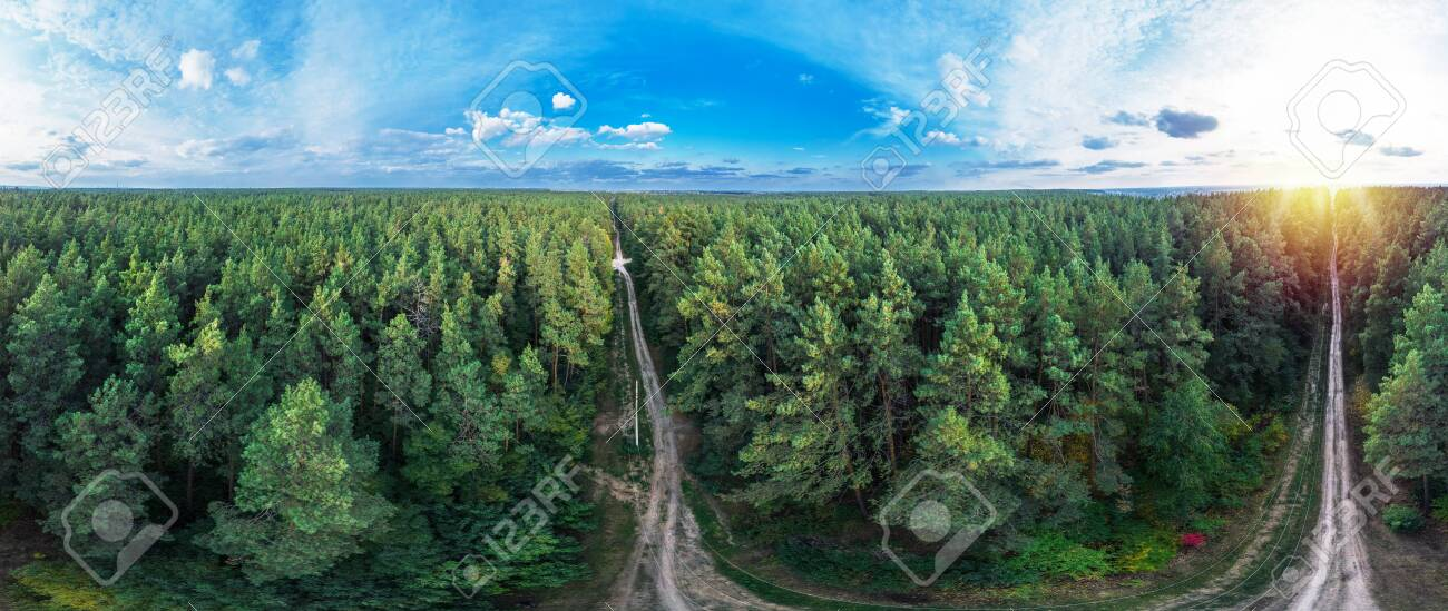 Picturesque and vivid view of evergreen pine forest and blue sky with white clouds. Nature background. - 149123447