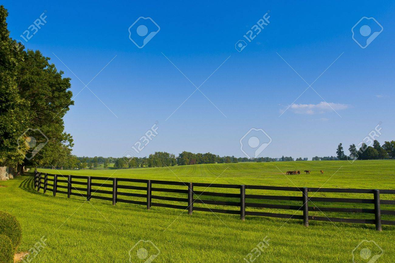 Green pastures of  horse farms Stock Photo - 11959464