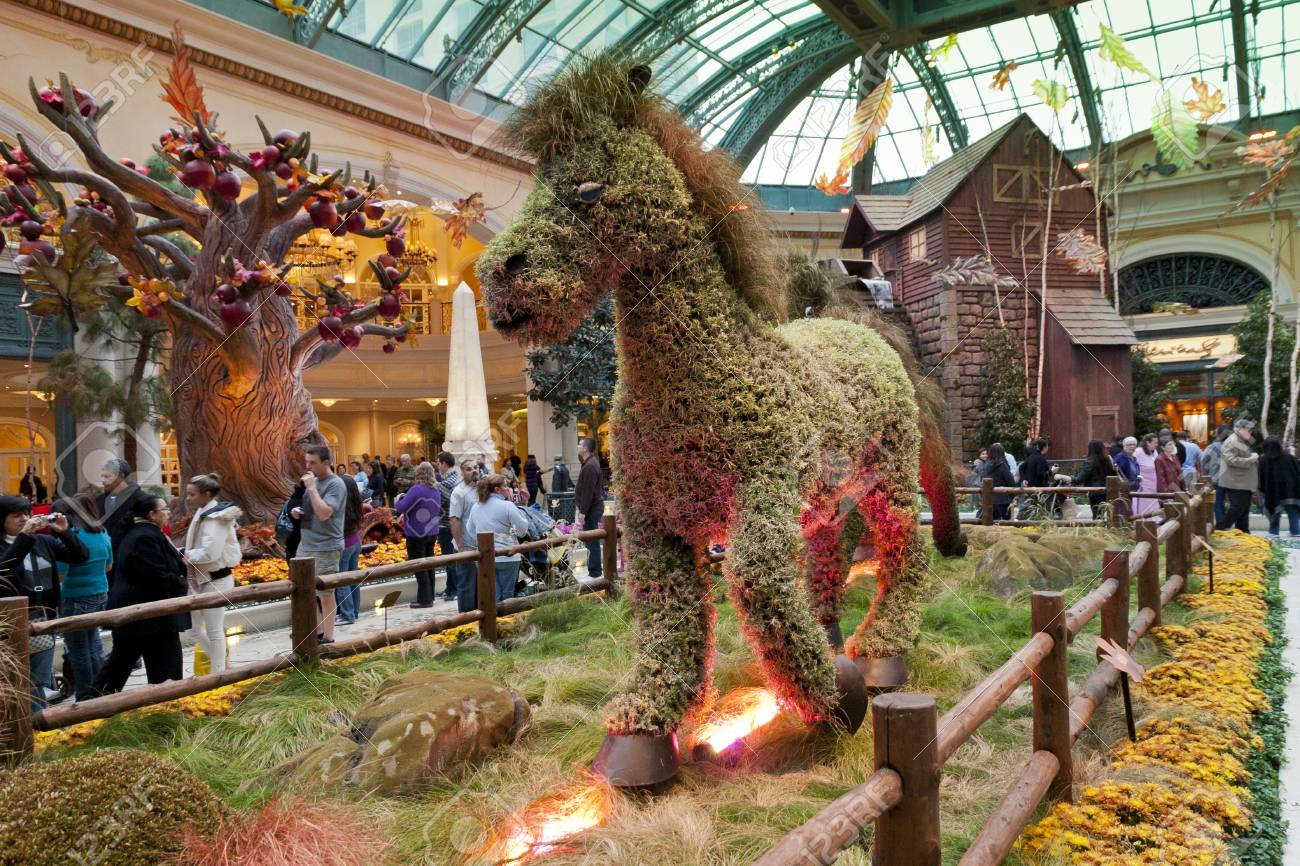 las vegas november 20 fall season in bellagio hotel conservatory botanical gardens on