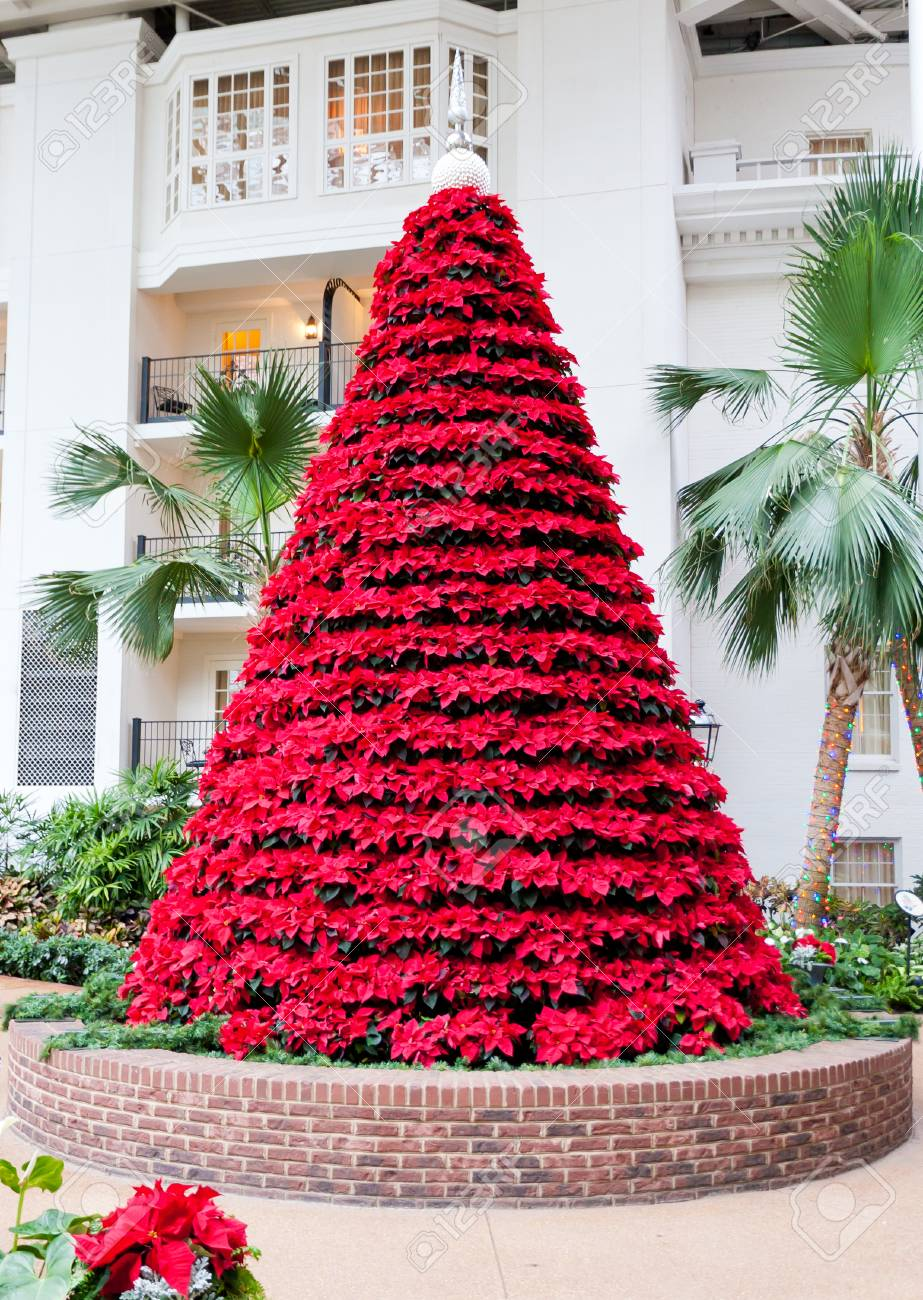 Pointsetta Christmas Tree.Christmas Tree Made From Red Poinsettias Flowers