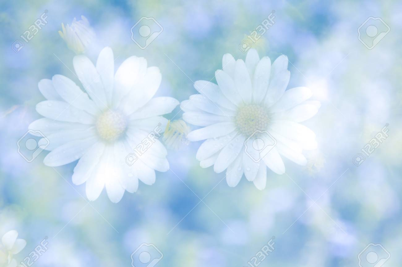 Abstract double exposure image with blurred daisy flowers on stock abstract double exposure image with blurred daisy flowers on natural background stock photo 70313104 izmirmasajfo