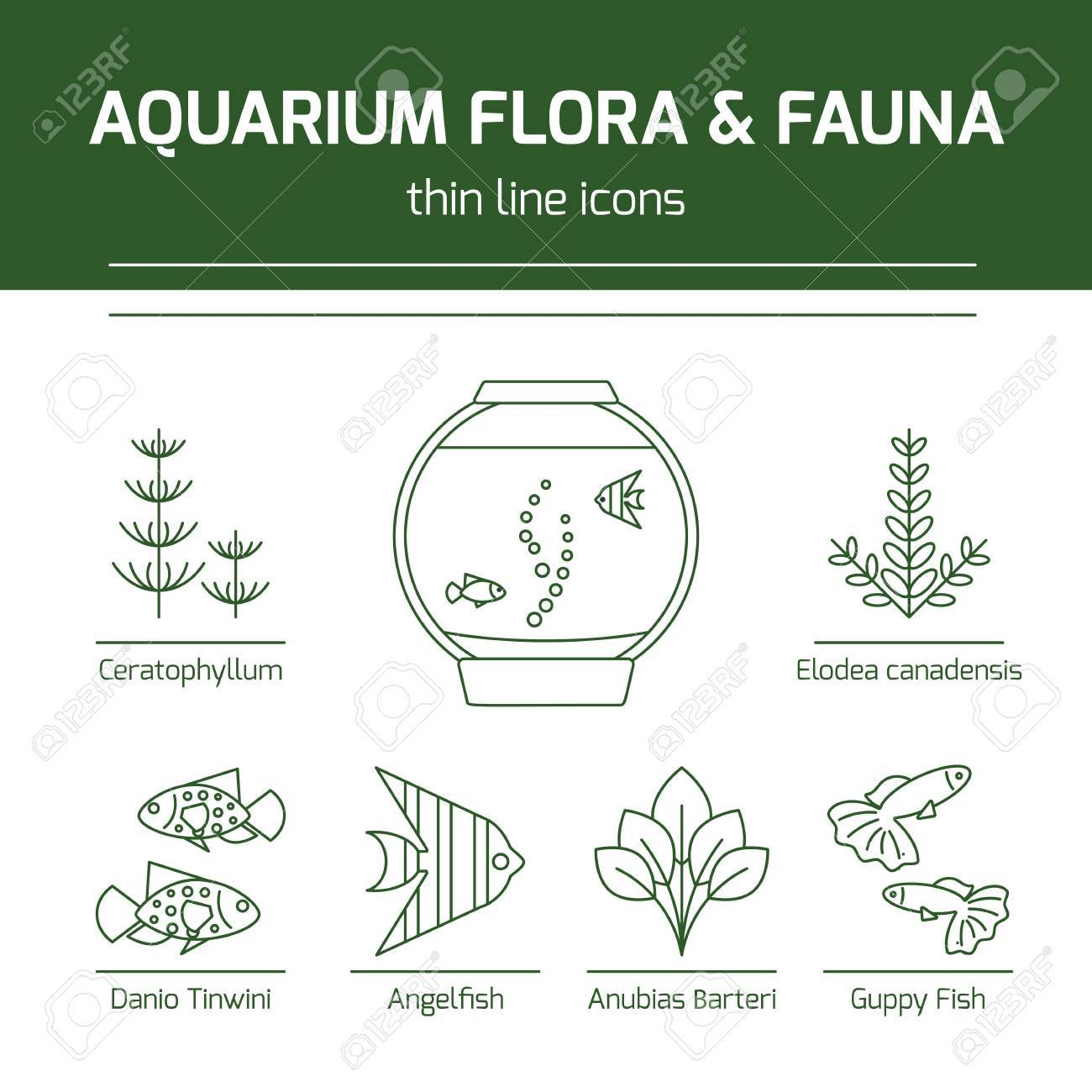 Thin line vector icons aquarium flora and fauna royalty free thin line vector icons aquarium flora and fauna stock vector 81714225 pooptronica