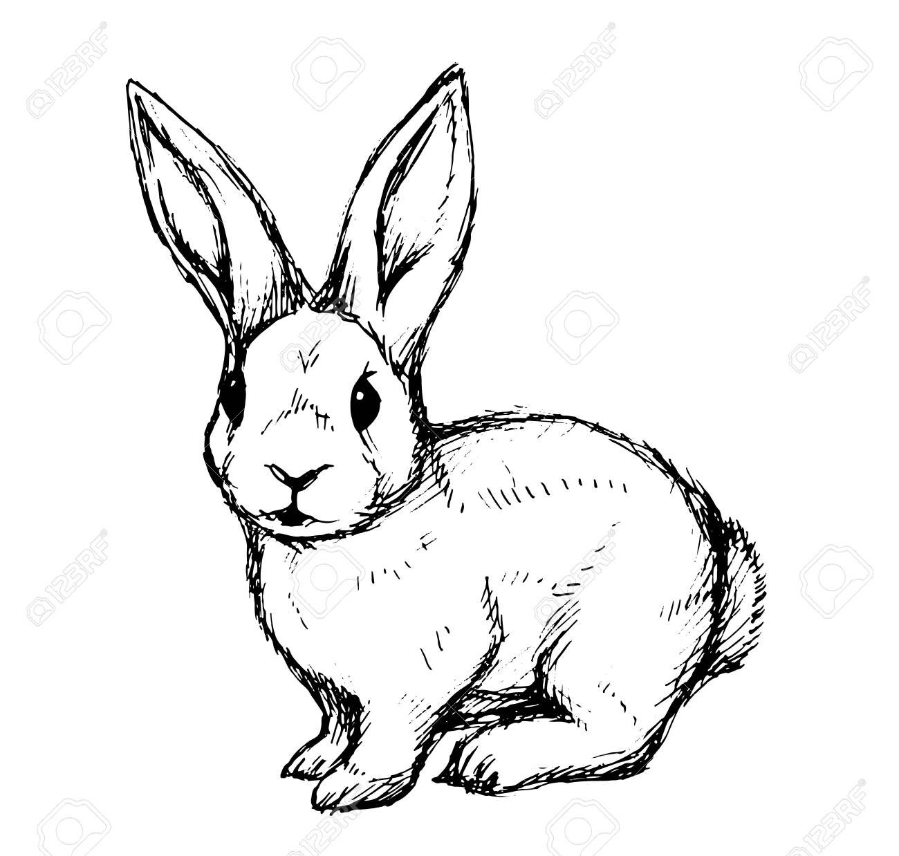 Black and white rabbit hand draw vector illustration for a card or poster
