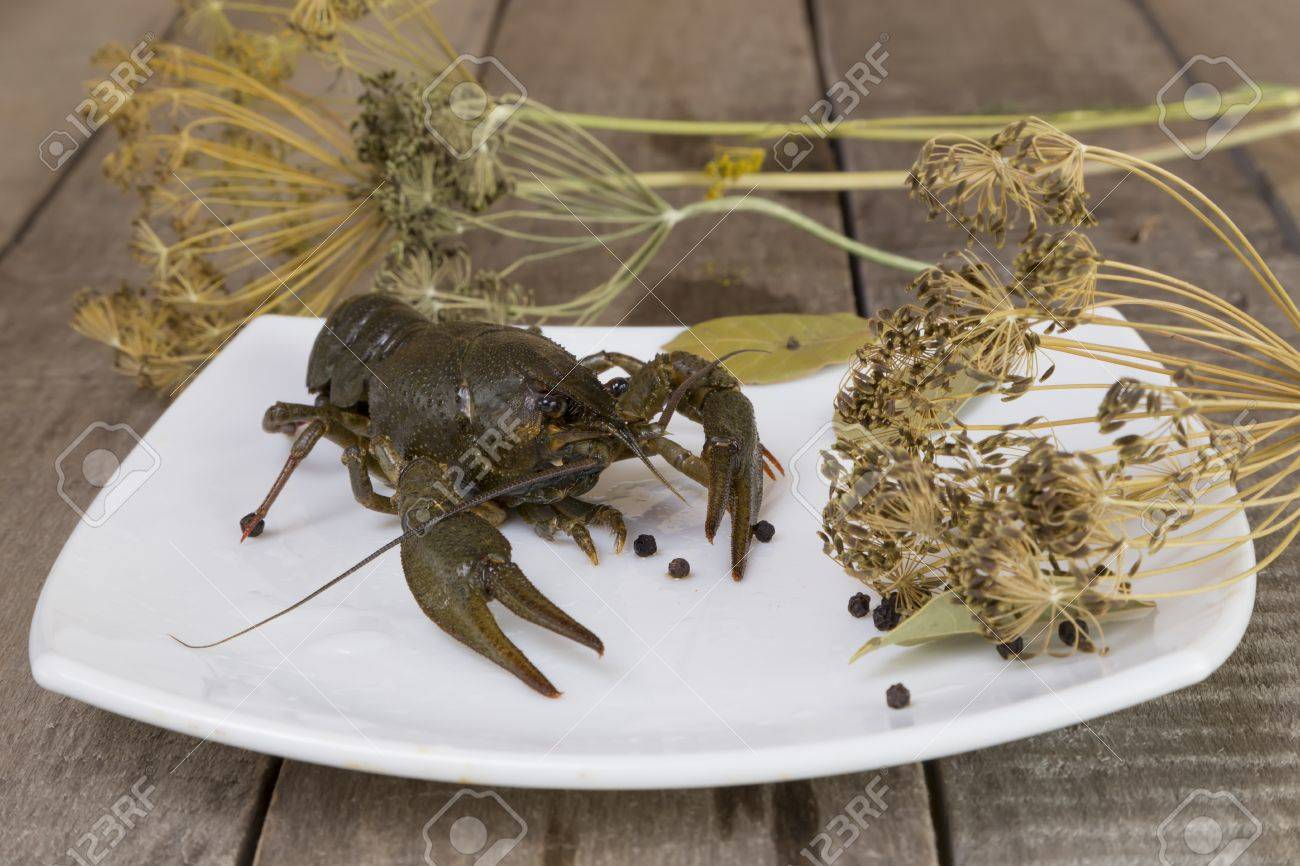 One green crayfish on the square plate on wooden background close-up Stock Photo - & One Green Crayfish On The Square Plate On Wooden Background Close-up ...