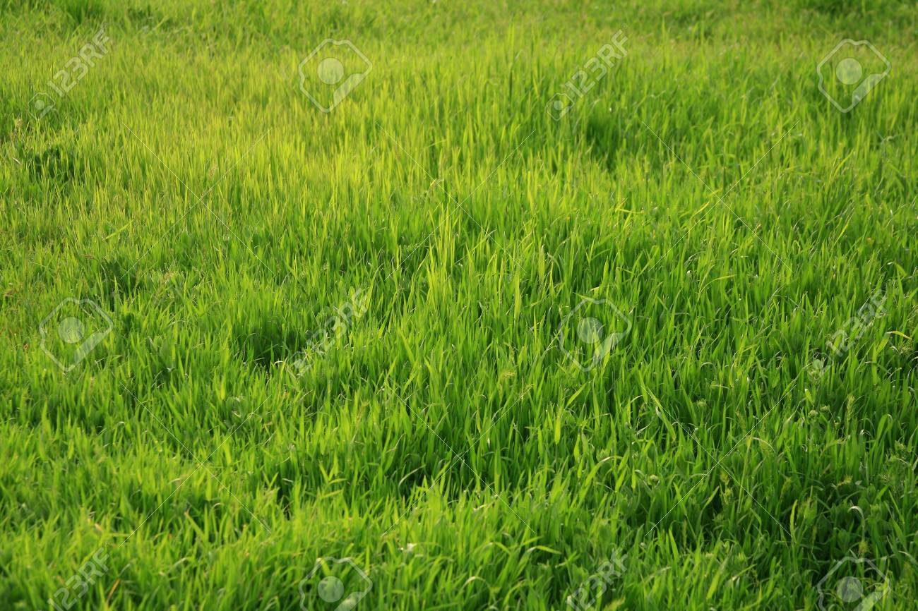 Photo of a green glade with a young grass-is possible to use as a background for illustrations and collages Stock Photo - 2954794