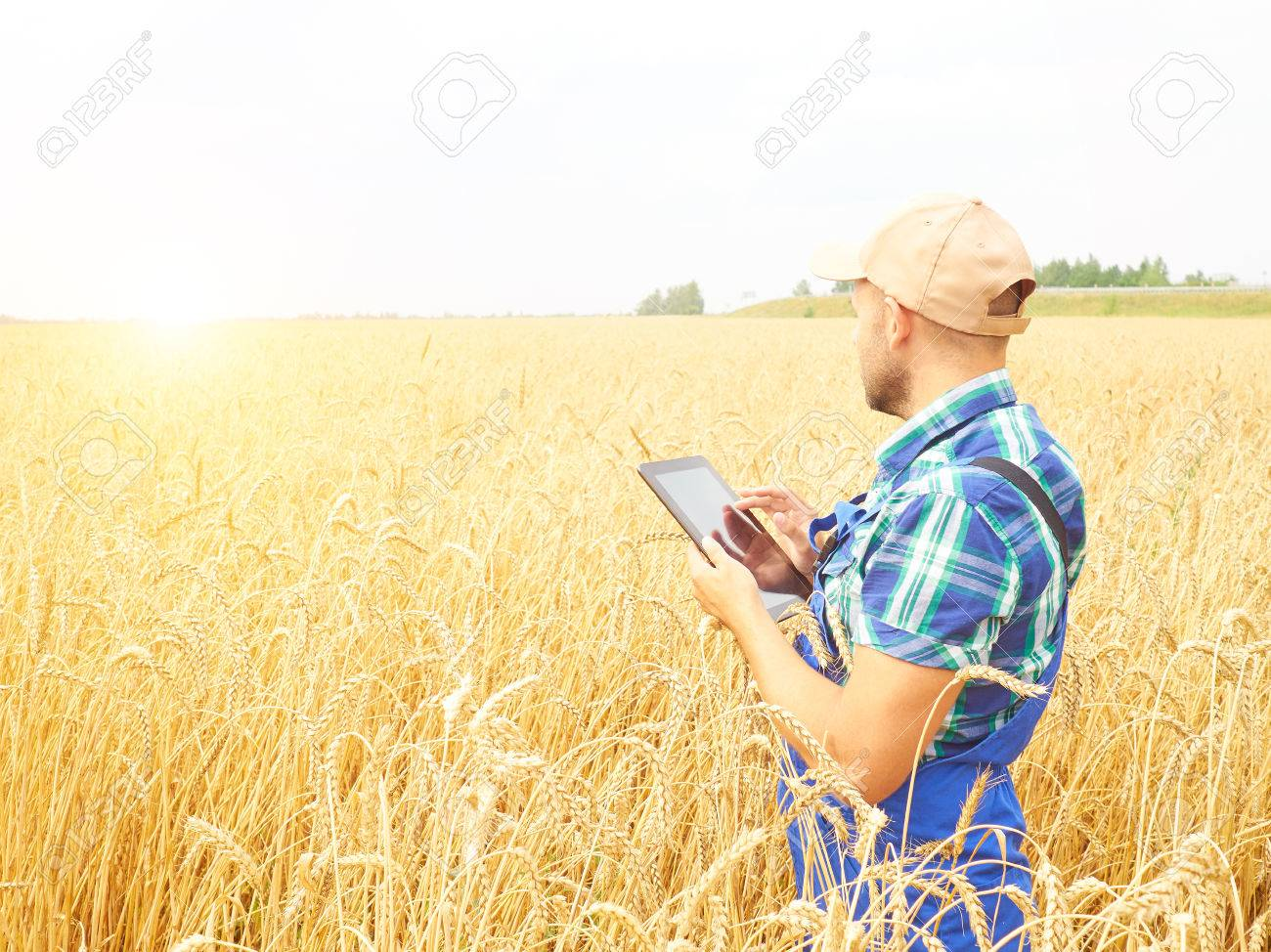 Farmer in a plaid shirt controlled his field and working at tablet. Wheat harvest. Agriculture. - 60905033