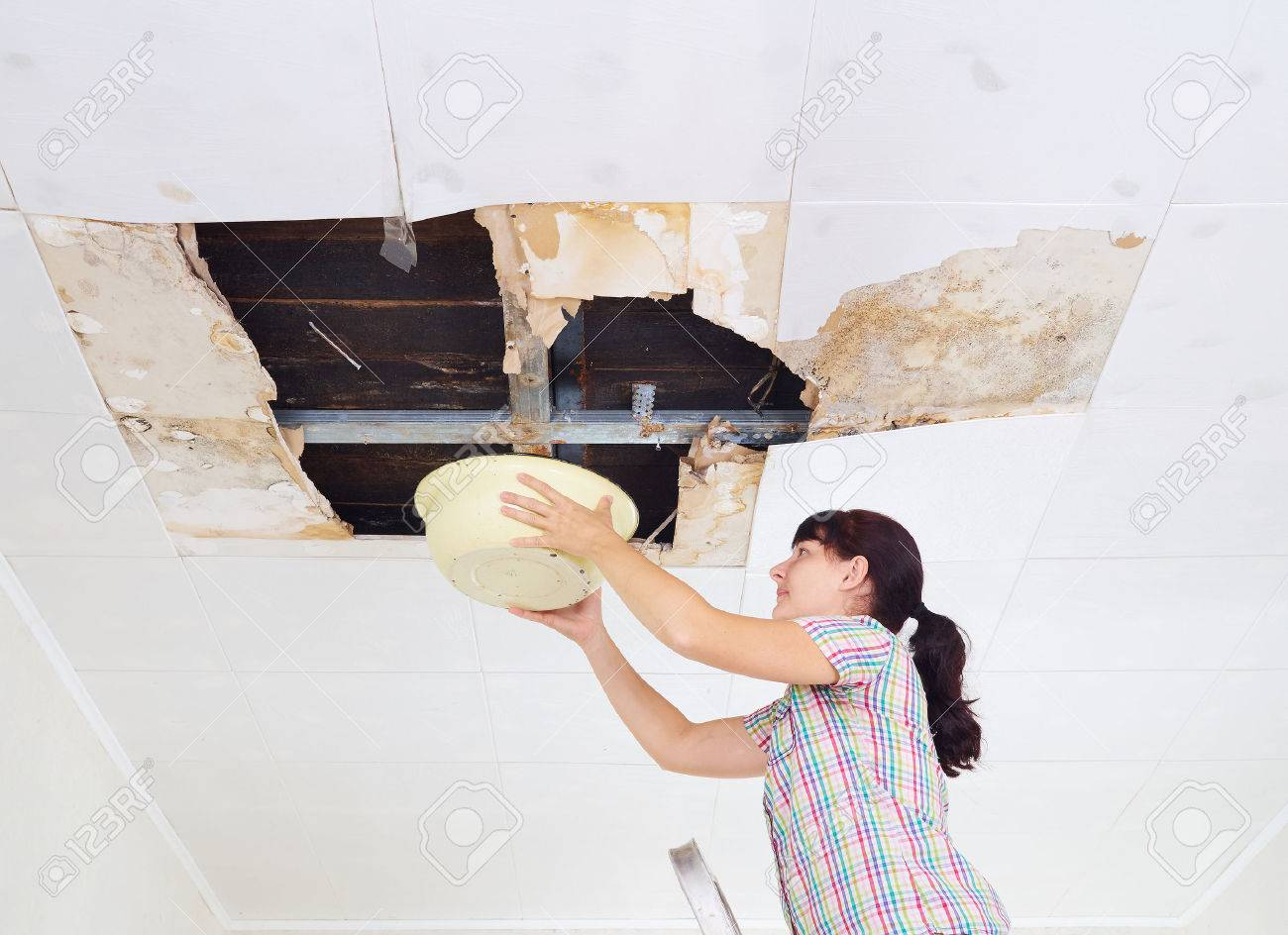 Young Woman Collecting Water In basin From Ceiling. Ceiling panels damaged huge hole in roof from rainwater leakage.Water damaged ceiling . - 64106862