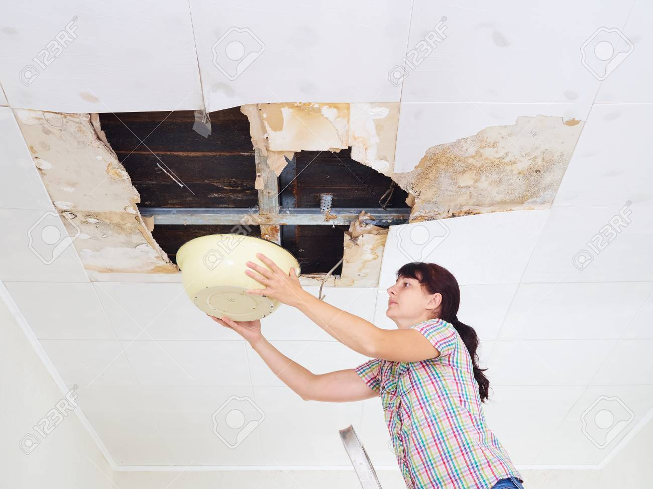 Young Woman Collecting Water In basin From Ceiling. Ceiling panels damaged huge hole in roof from rainwater leakage.Water damaged ceiling . - 66391578
