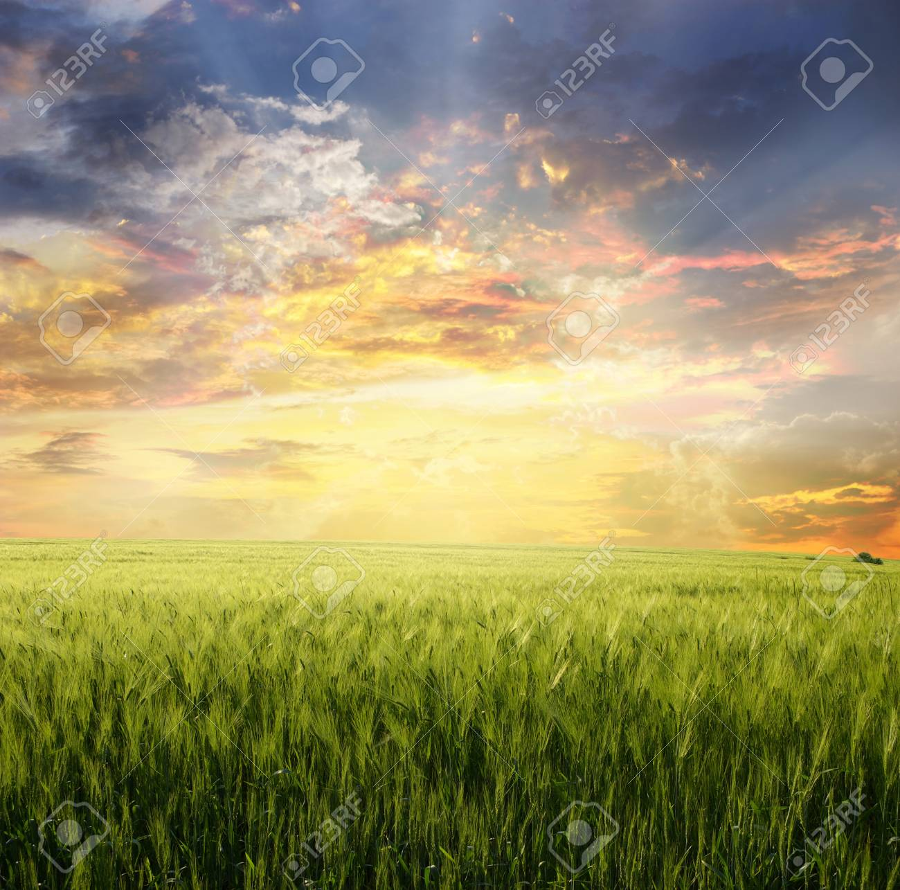 Yellow meadow under blue sky with clouds Stock Photo - 17979902