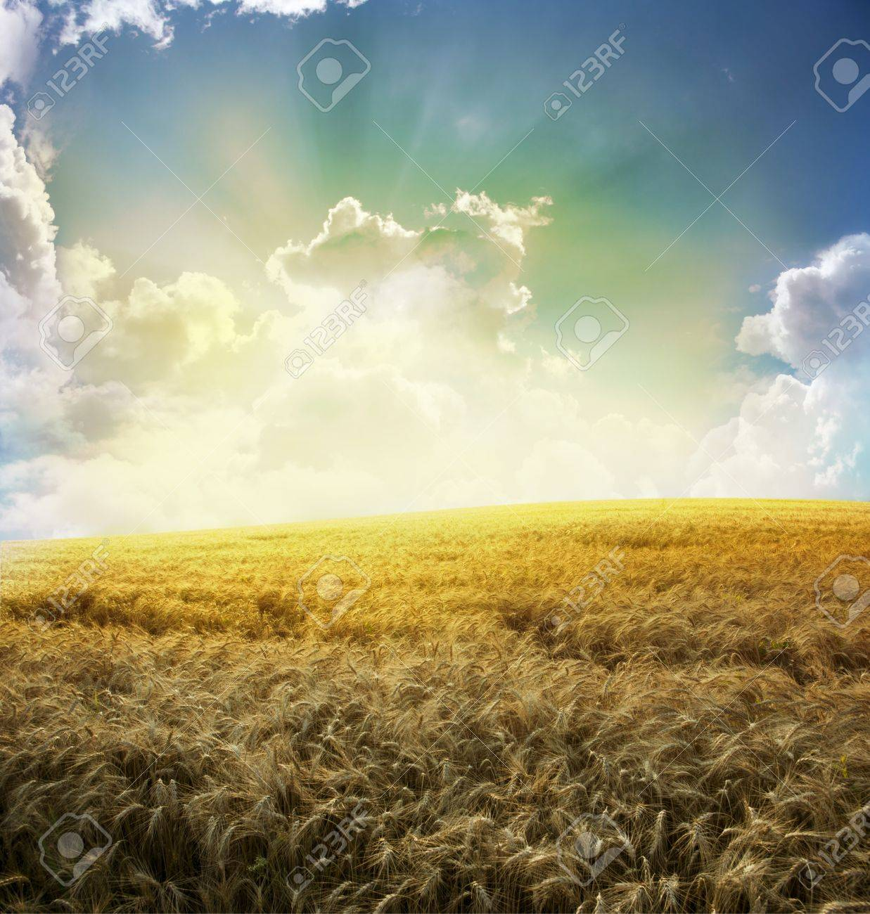 Yellow meadow under blue sky with clouds Stock Photo - 18015118