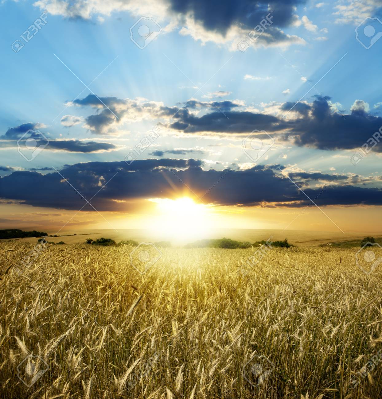 Yellow meadow under blue sky with clouds Stock Photo - 18054191