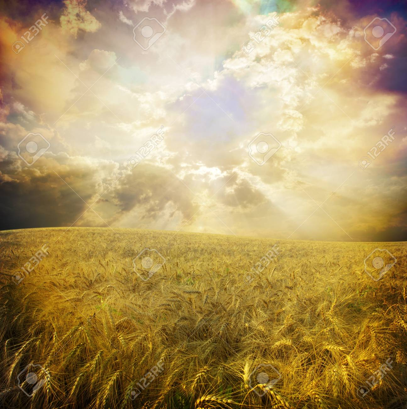 Yellow meadow under blue sky with clouds Stock Photo - 18105942