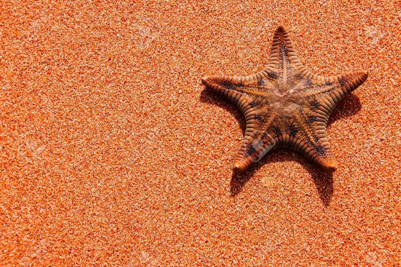 Single starfish is on the sand background Stock Photo - 10604262