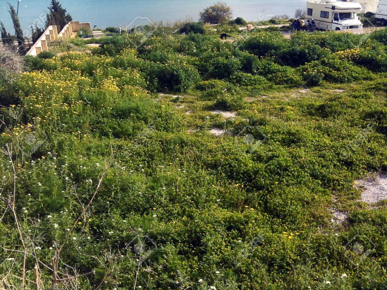 Tough vegetation groundcover in Malta - 34392743