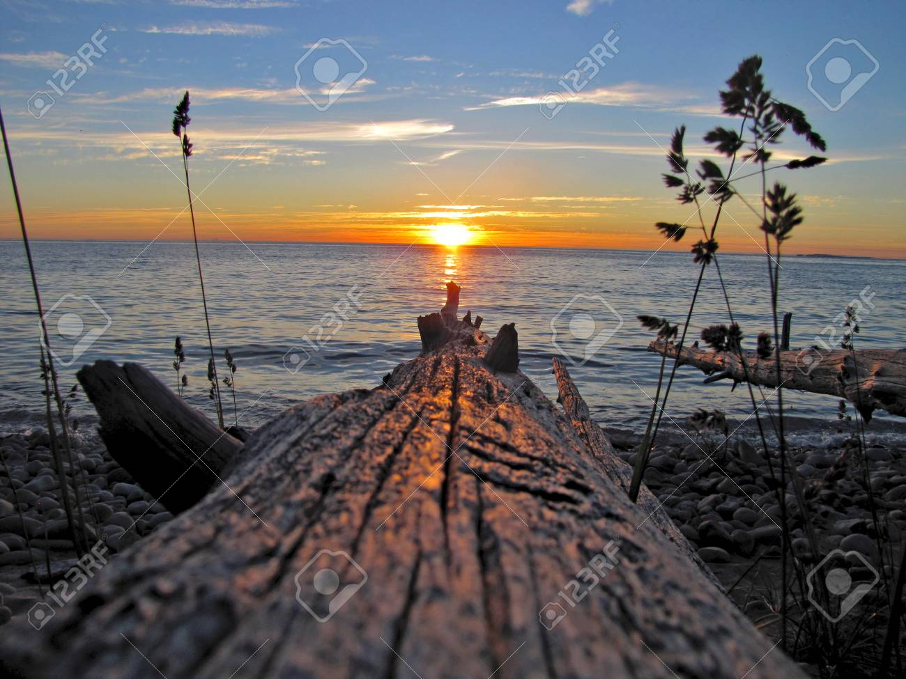 A sunset on Lake Michigan as seen from a fallen tree - 34435176