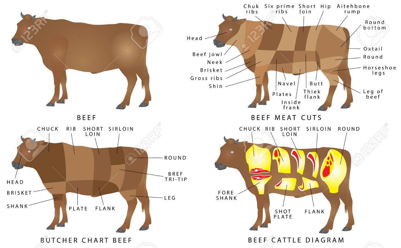 226fe20736 Gráfico De La Carne De Vacuno. Cortes De Carne. Carne De Vaca Corta  Diagrama. Cortes De Carne De Res. Carne De Vacuno Carne De Corte.