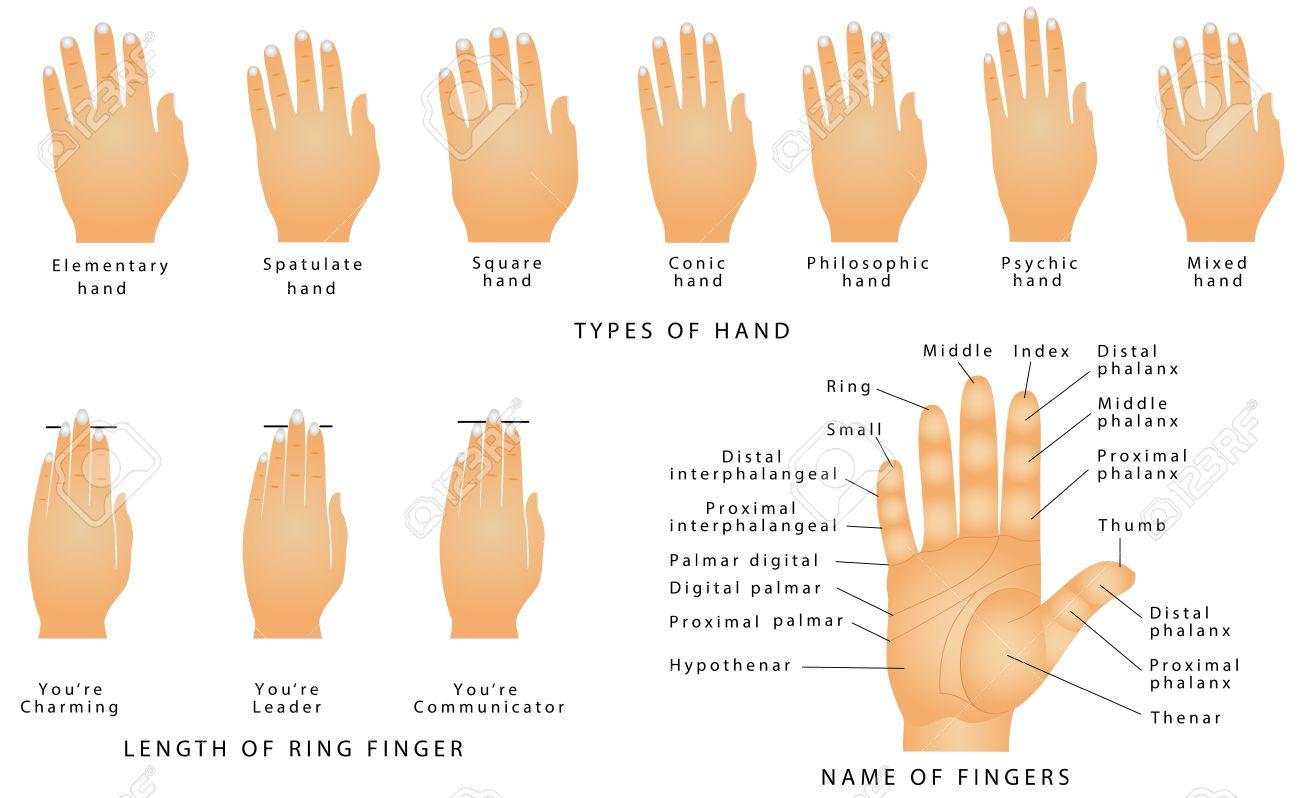 Ringfinger rechte hand