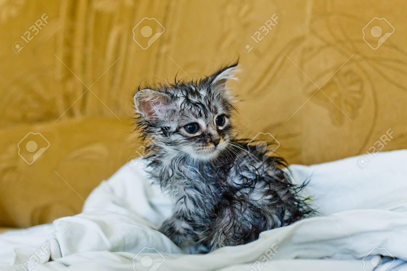 parásitos en el baño