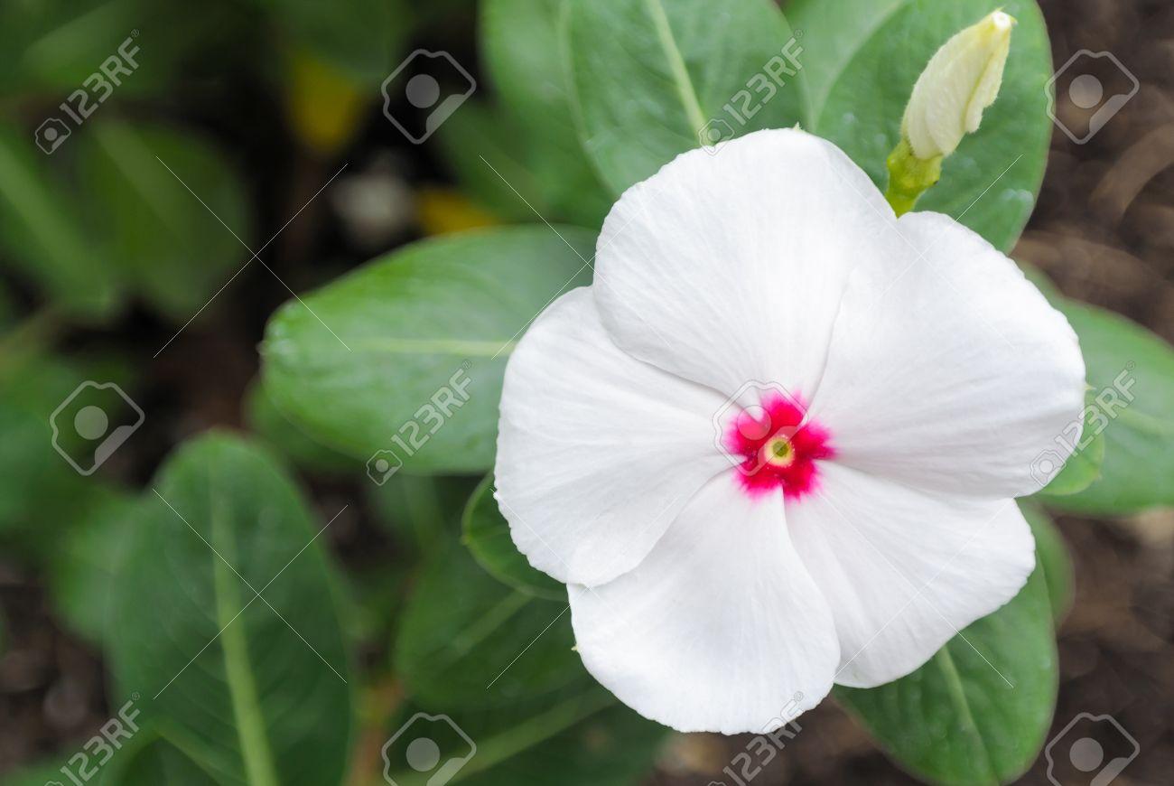 seule fleur blanche avec fleur coeur rose sur fond vert feuille