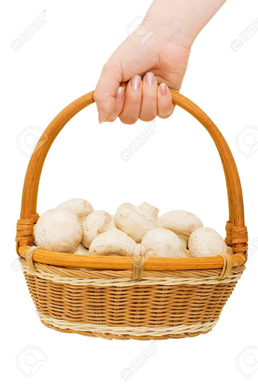 Basket with field mushrooms in a hand Stock Photo - 6818340