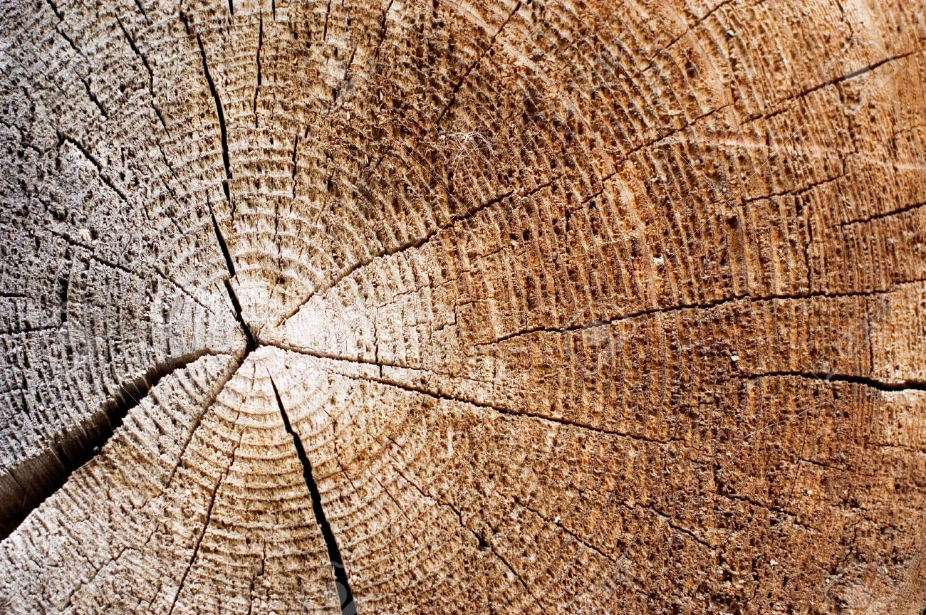 Cut of an old tree. Close up Stock Photo - 6818147