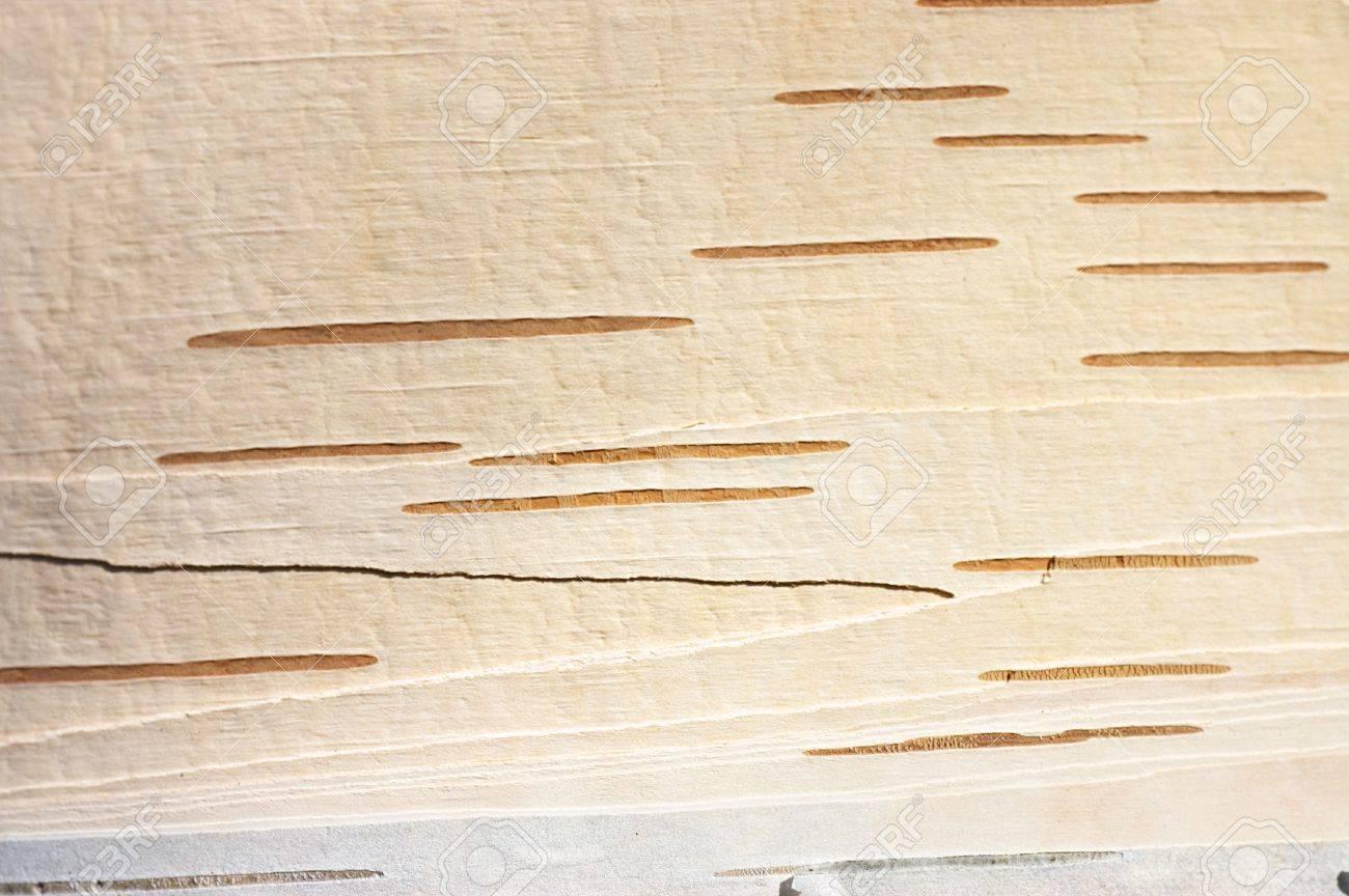 Dark birch tree bark as background picture Stock Photo - 6818368