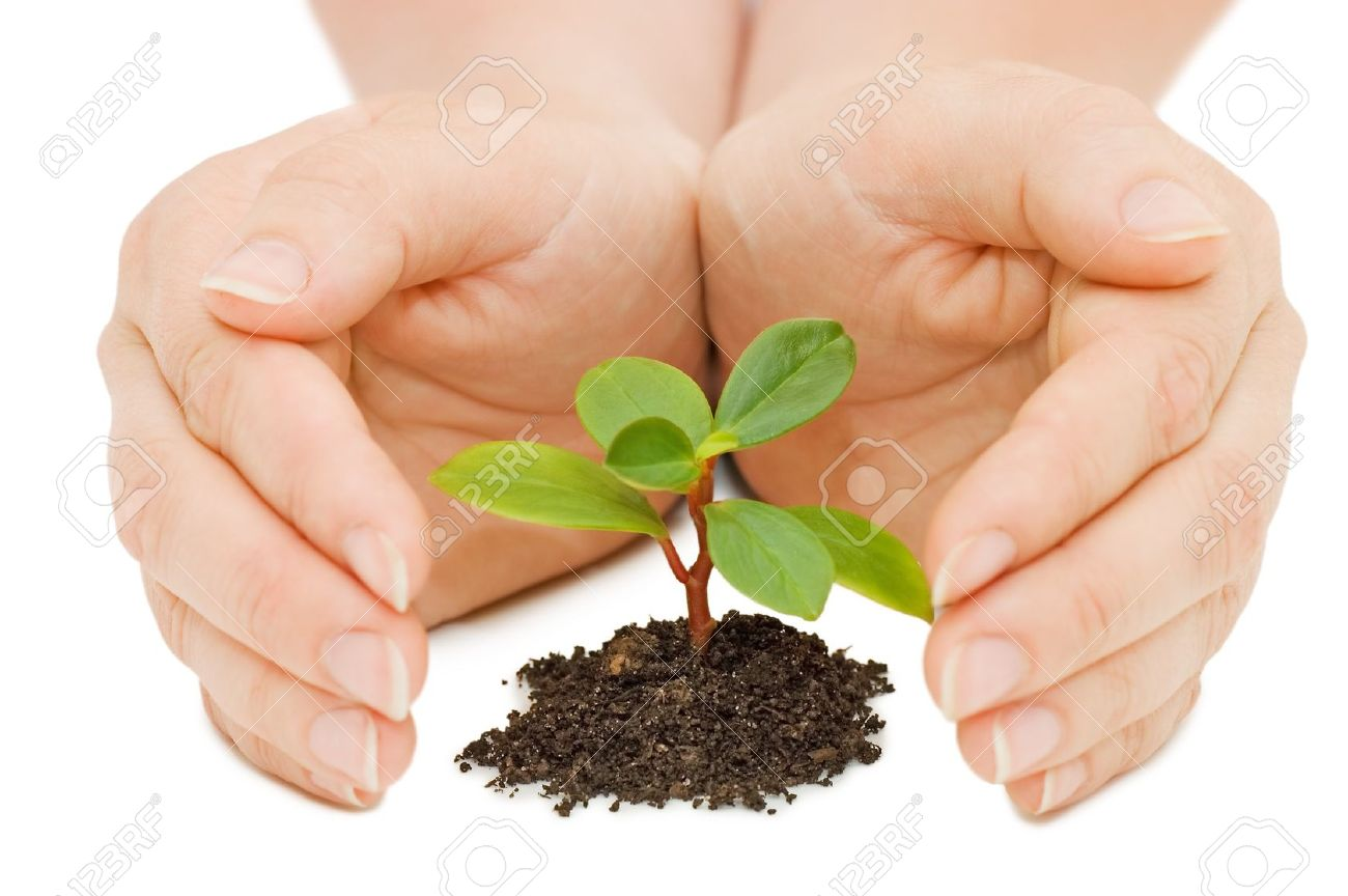 Young sprout and hands Stock Photo - 7101440