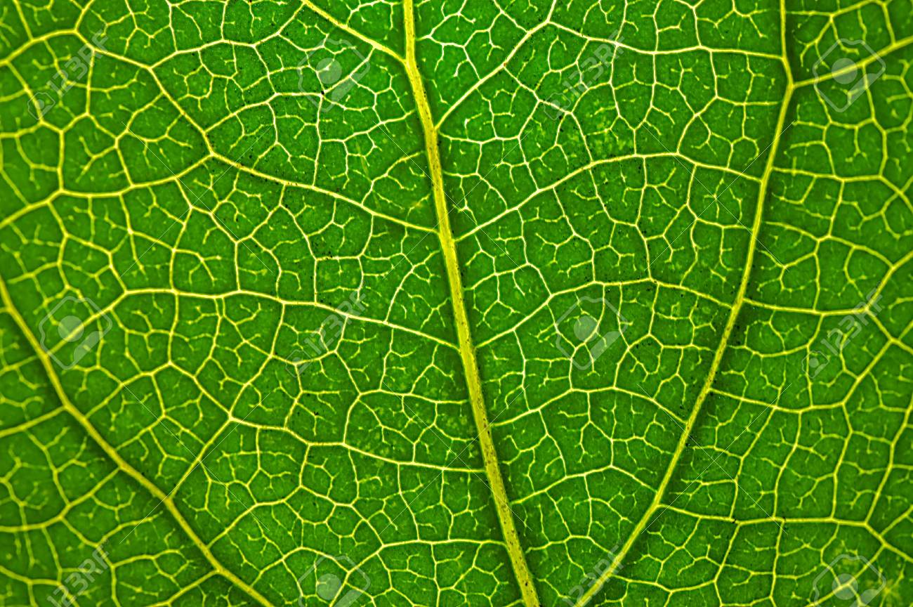 Leaf of a plant close up Stock Photo - 7970899