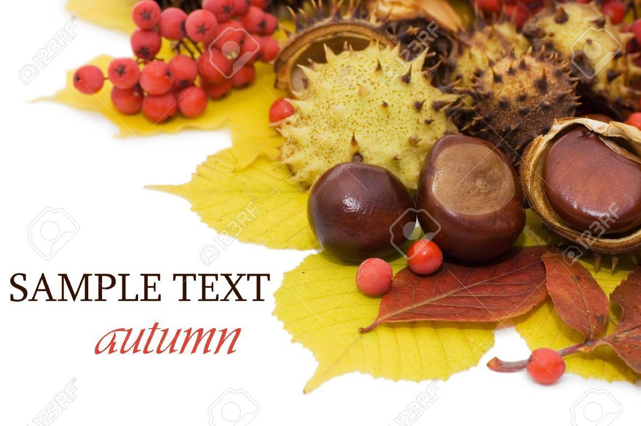 Autumn leaves and fruits isolated on white background Standard-Bild - 8075640