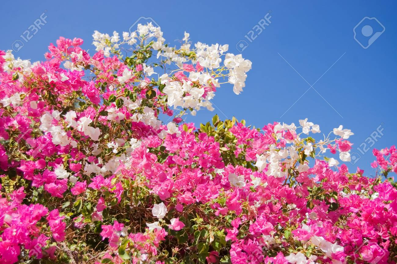 Beautiful tropical flowers against the sky Stock Photo - 8076396