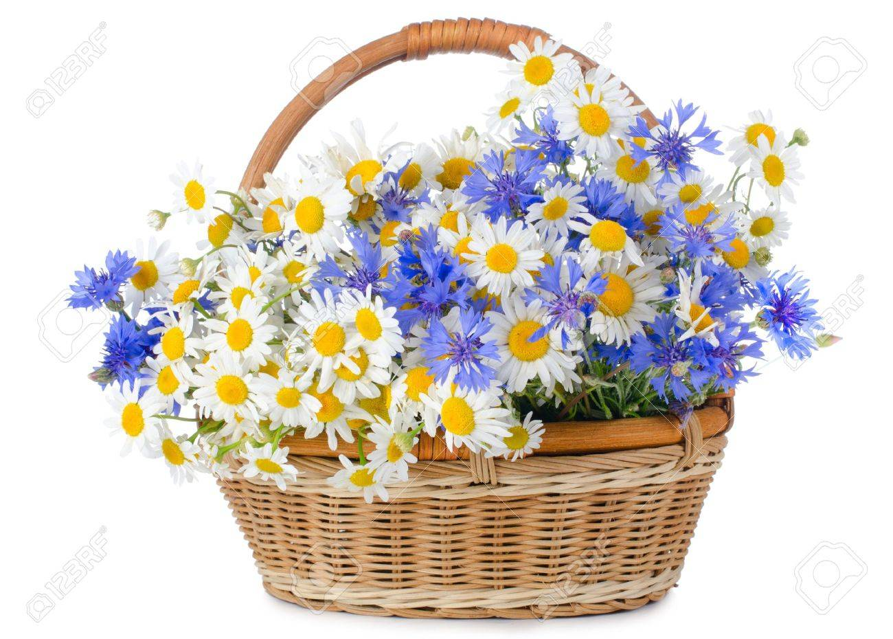Beautiful flowers in basket isolated on white Stock Photo - 9944787