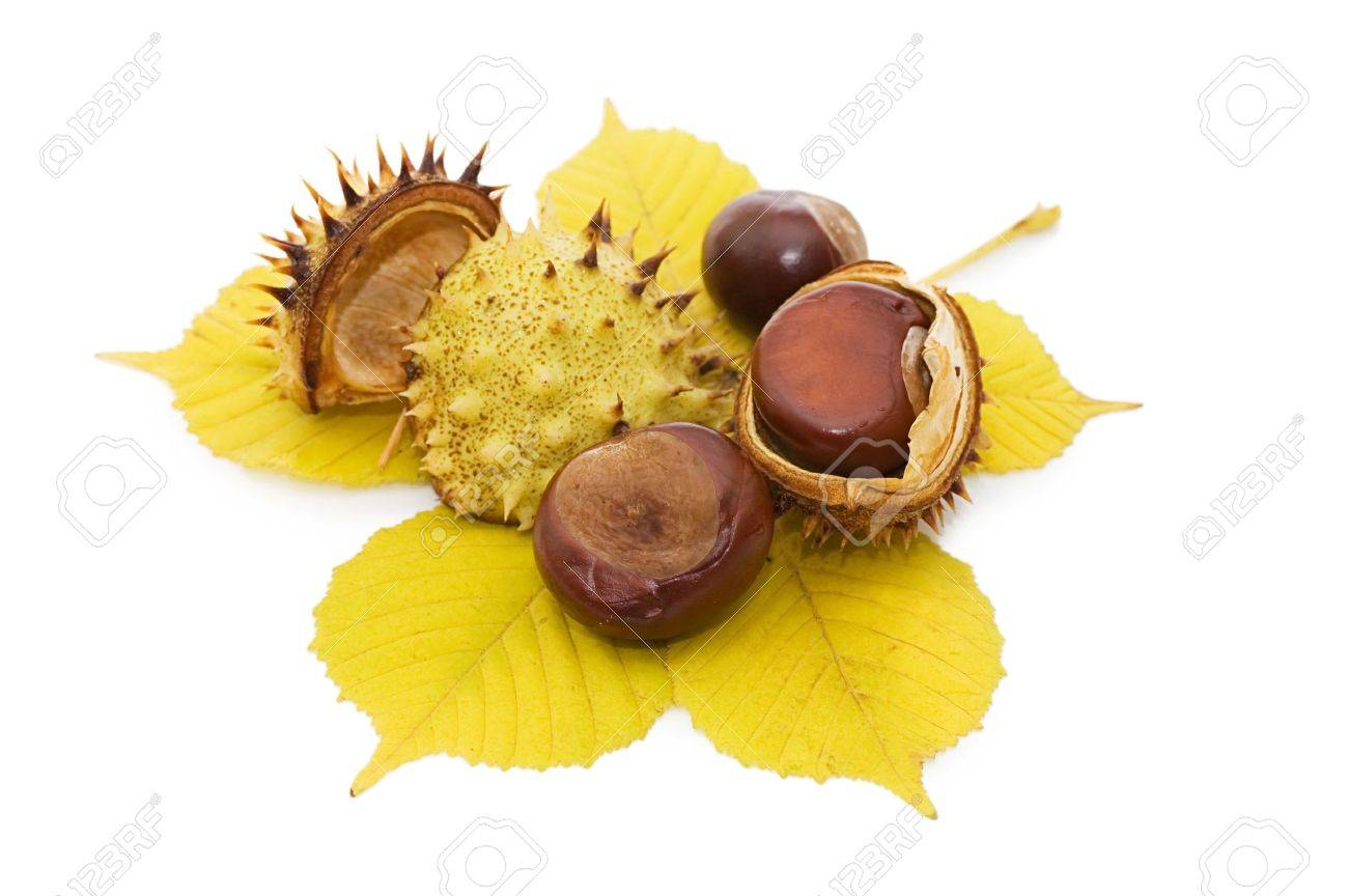 Brown chestnut nut closeup isolated on white Stock Photo - 10216267