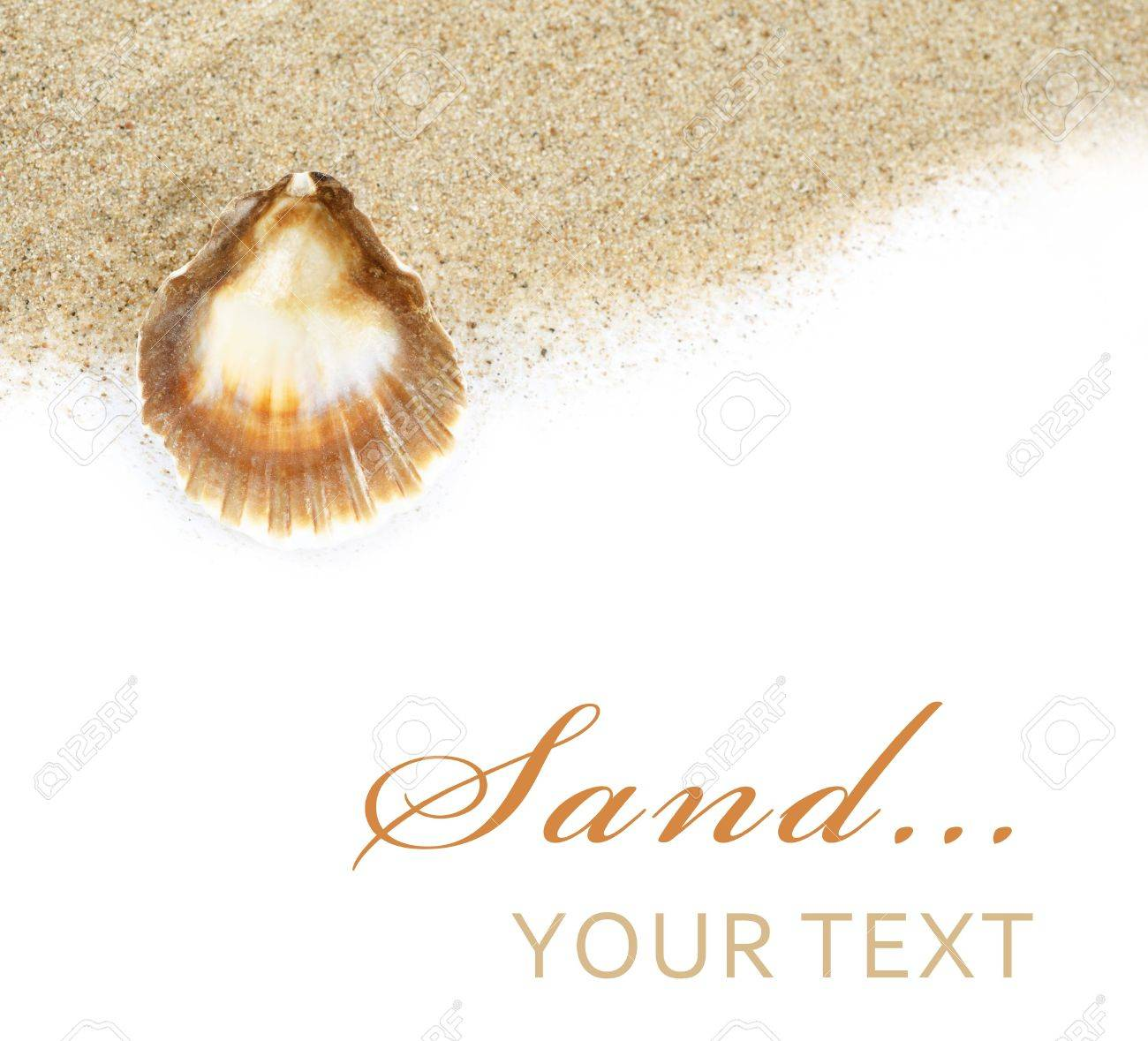 The sea shell isolated on white background Stock Photo - 11547782