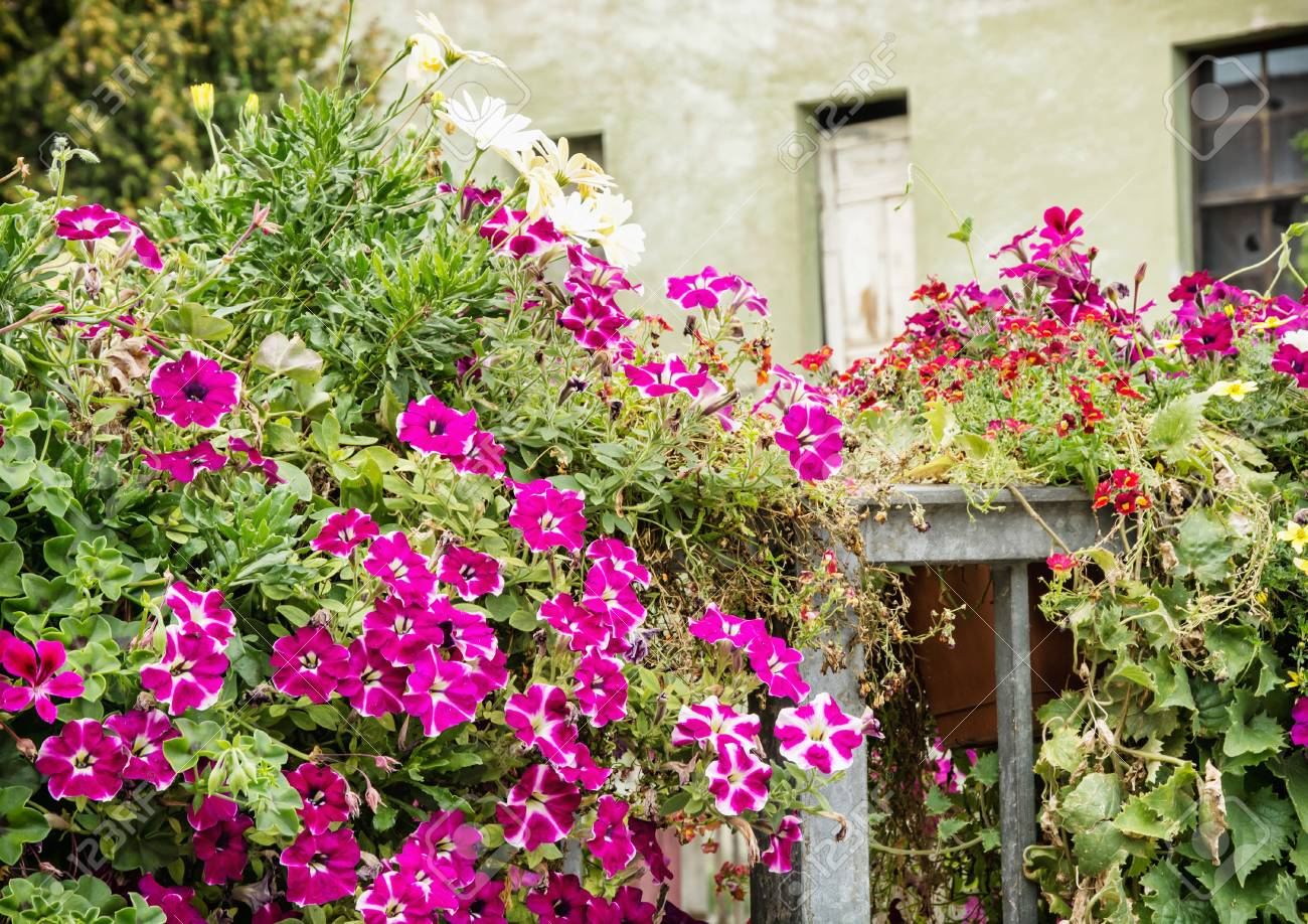 Old house and beautiful flowers in bed street natural decoration old house and beautiful flowers in bed street natural decoration stock photo 55458292 izmirmasajfo
