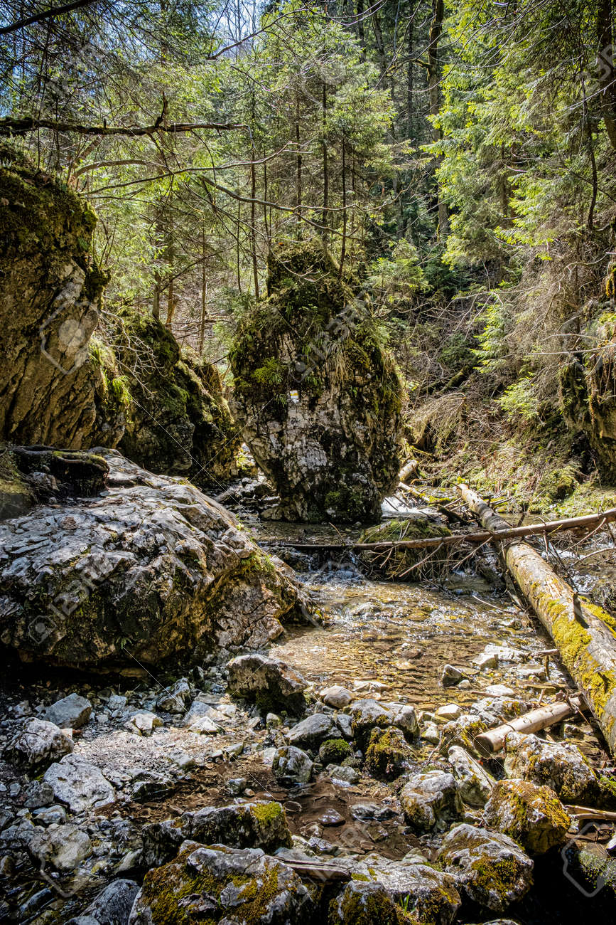 Velky Sokol gorge, Slovak Paradise national park. Seasonal natural scene. - 169797823