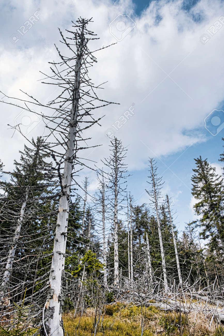 Dried trees, Big Fatra mountains, Slovak republic. Seasonal natural scene. Forest calamity theme. - 169797891