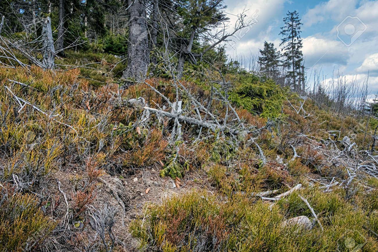 Dried trees, Big Fatra mountains, Slovak republic. Seasonal natural scene. Forest calamity theme. - 169797894