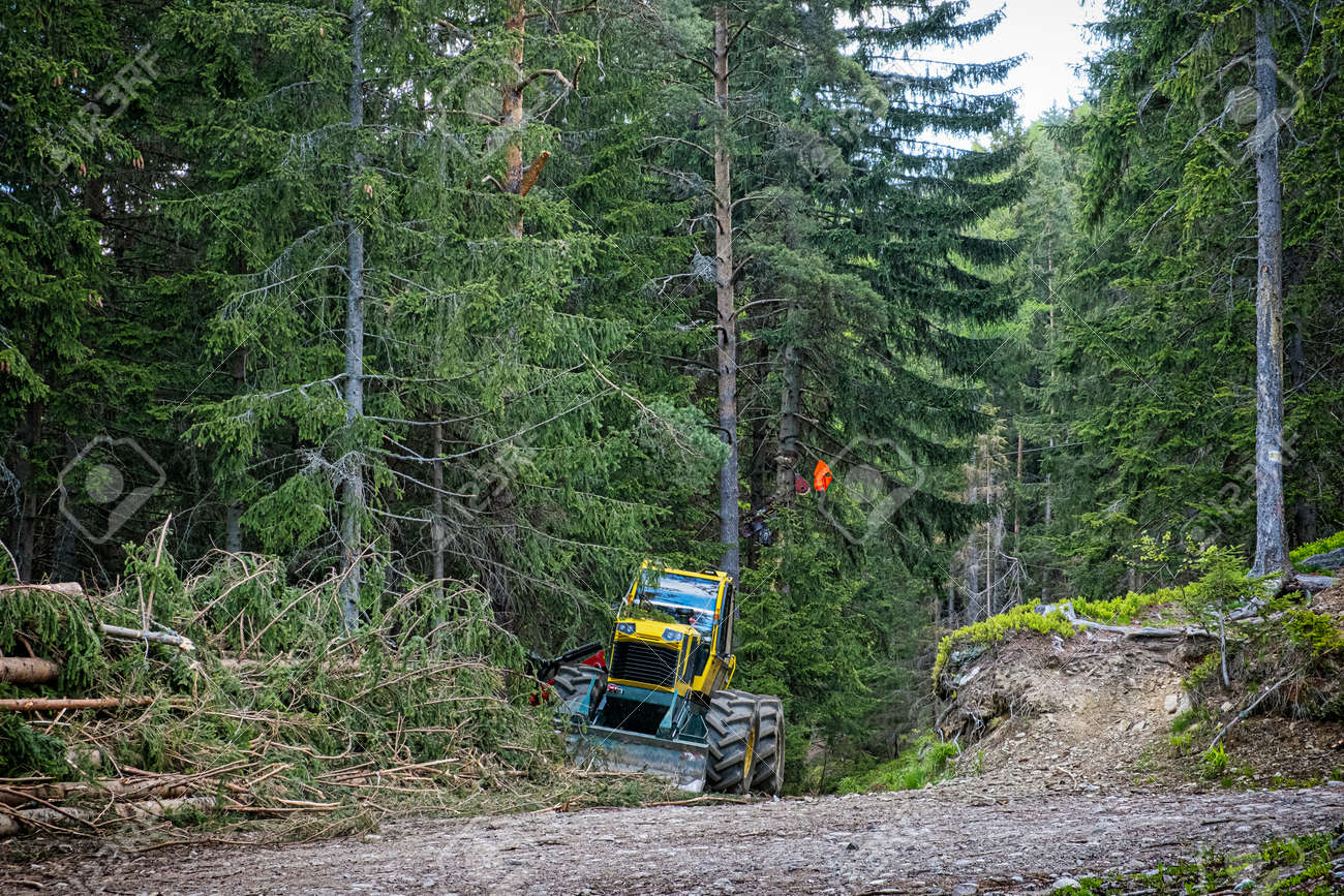 Tree logging in Ziar valley, National park Western Tatras, Slovak republic. Deforestation theme. Seasonal natural scene. - 169797945