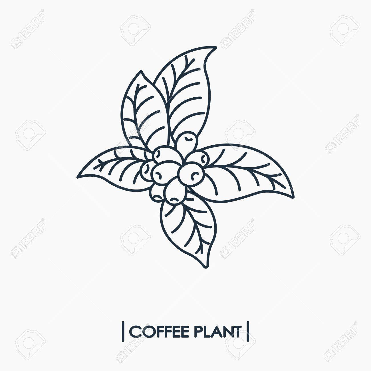 Line Icon Coffee Plant With Leaf And Beans Royalty Free Cliparts