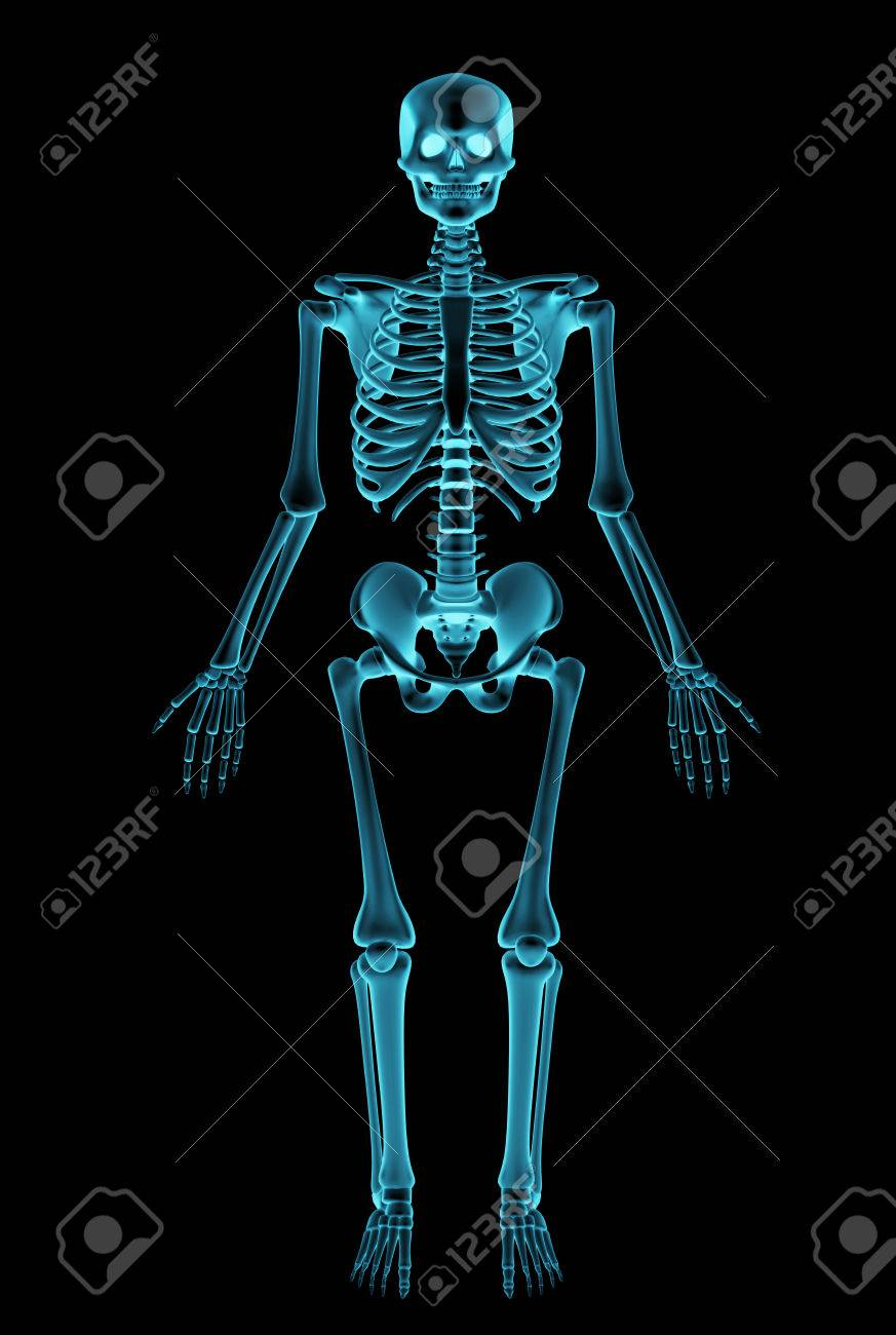 Negative Radiograph Of A Human Skeleton Stock Photo Picture And