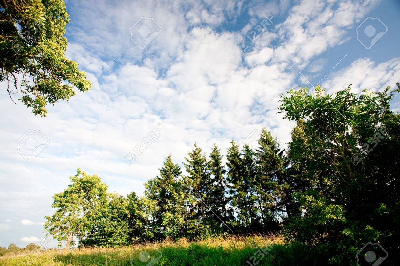 green forest and blue sky Stock Photo - 5372740