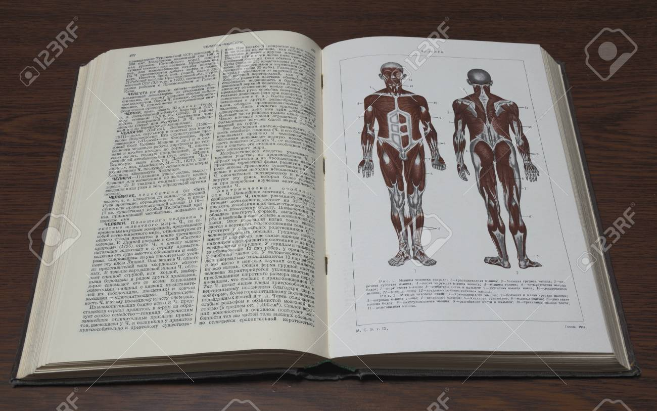 An Article About The Human Anatomy In The Little Soviet Encyclopedia