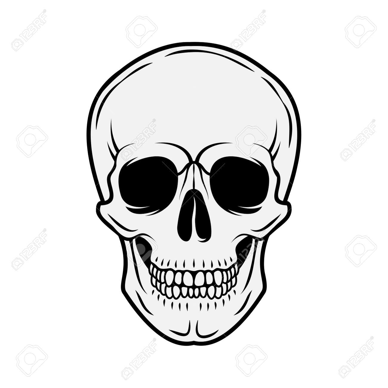 Human skull. Front view. Vector black and white hand drawn illustration isolated on white background - 165845613