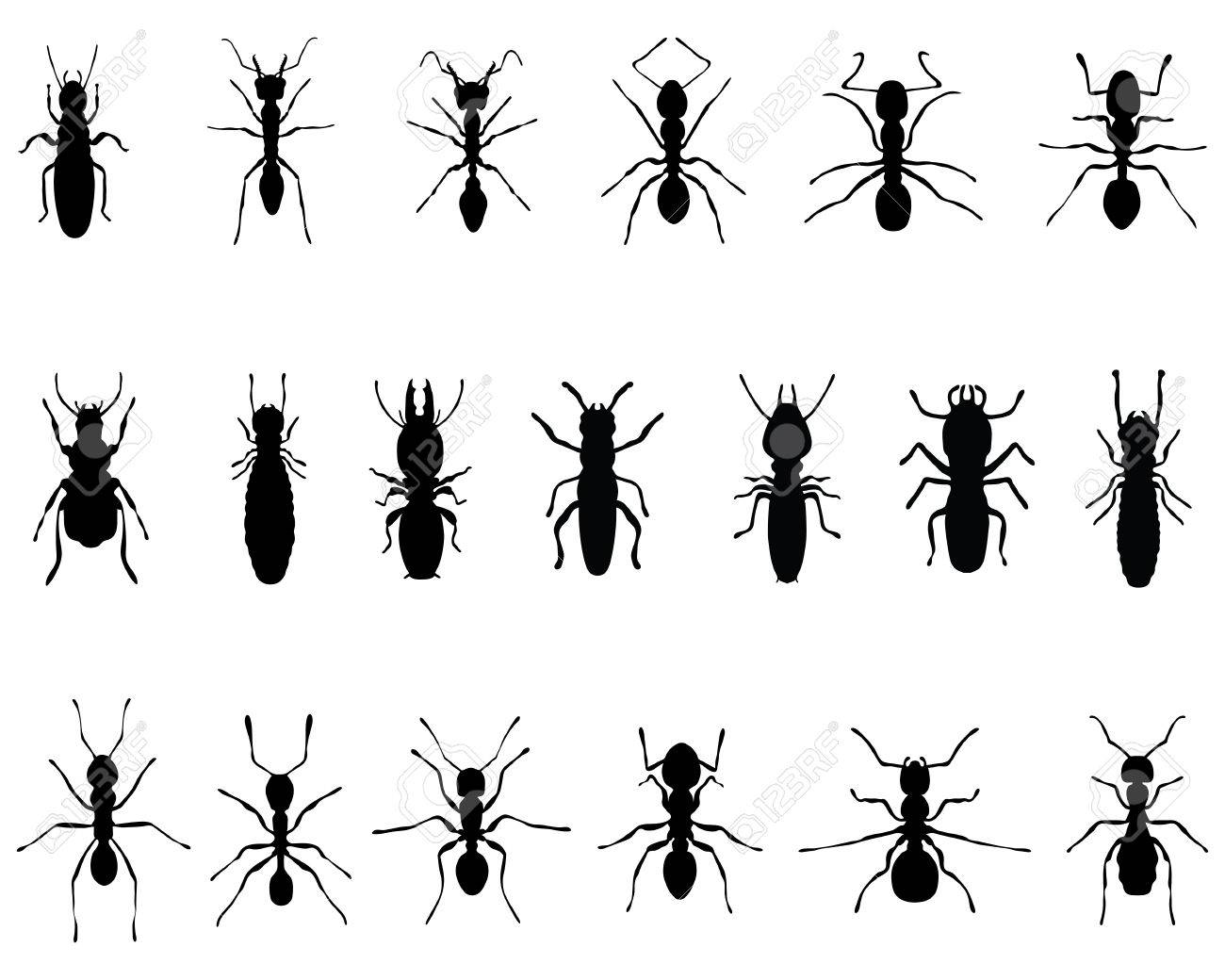 Black Silhouettes Of Ants And Termites, Vector Royalty Free Cliparts ...
