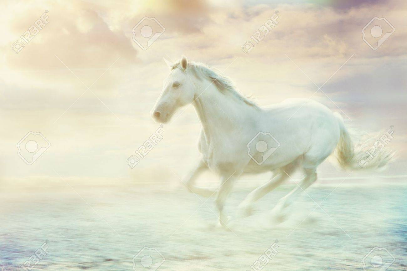 White Running Horse Sky Fantasy Background Stock Photo Picture And Royalty Free Image Image 13532199