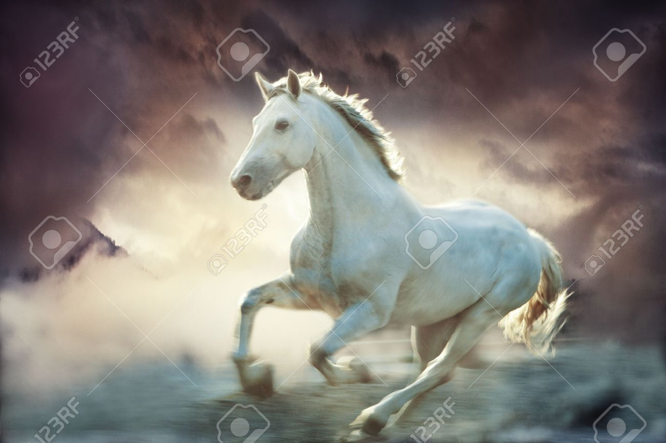 White Running Horse Sky Fantasy Background Small Amount Of Stock Photo Picture And Royalty Free Image Image 13532244